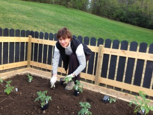 Laurie shows her green thumb planting some tomato plants in the new raised beds at Hannah Ford Farm.