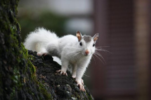white-squirrel-in-brevard